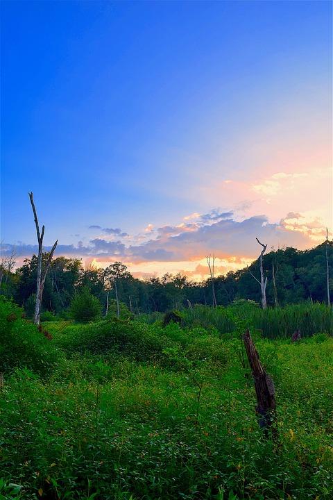 Field, Sunset, Trees, Summer, Nature, Landscape, Sky