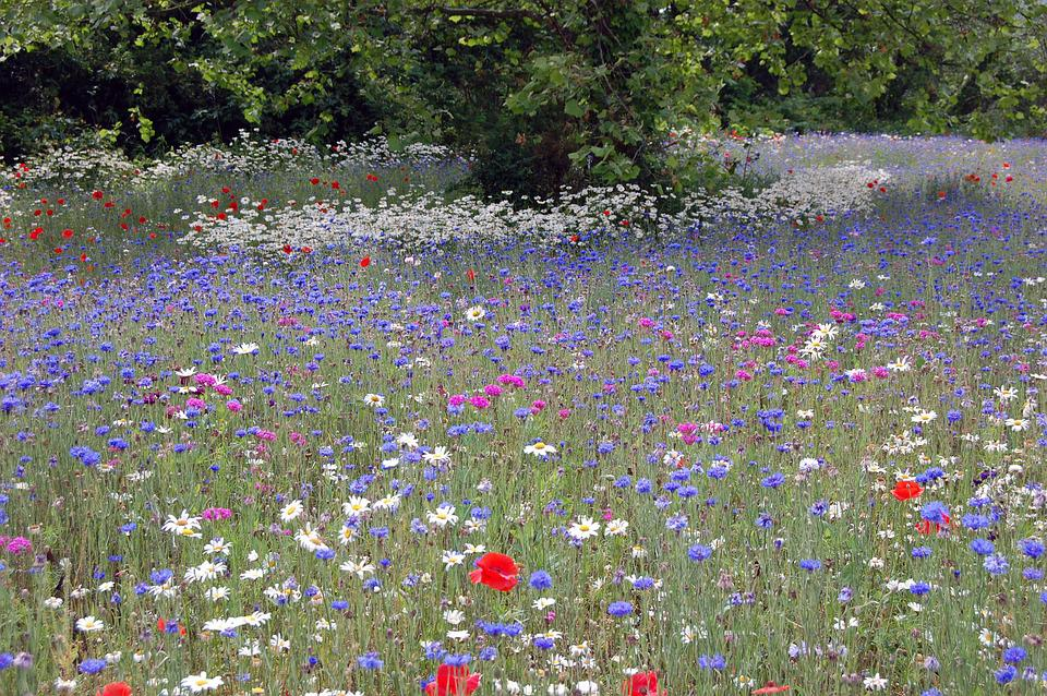 The, Flower, Field
