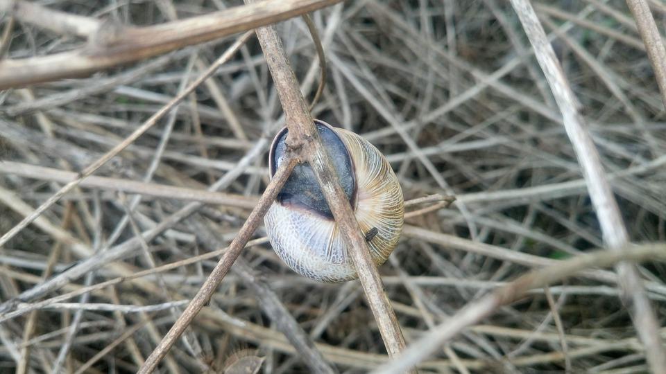 Grass, Field, Snail, Nature, Landscape, Tranquility