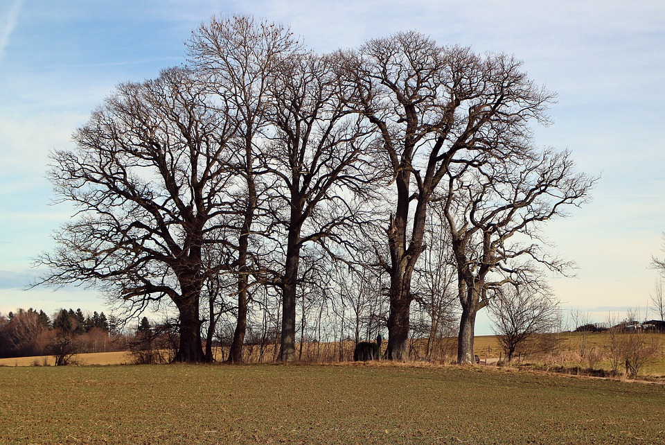 Trees, Grove Of Trees, Group, Field