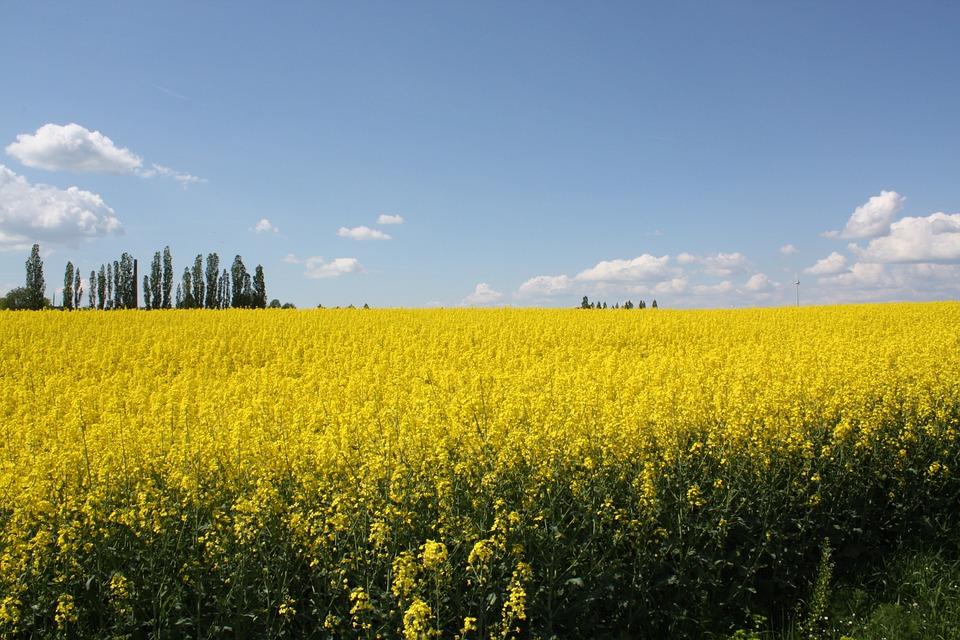 Wide, Freedom, Fields, Yellow, Field, Art, Summer