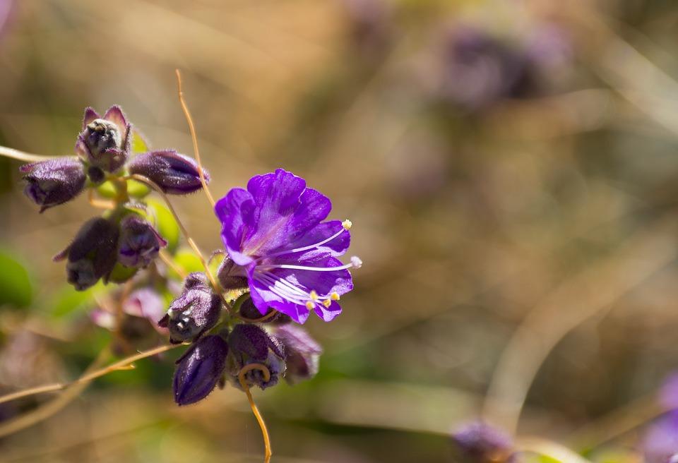 Flowers, Field, Nature, Wild, Purple, Wild Flowers