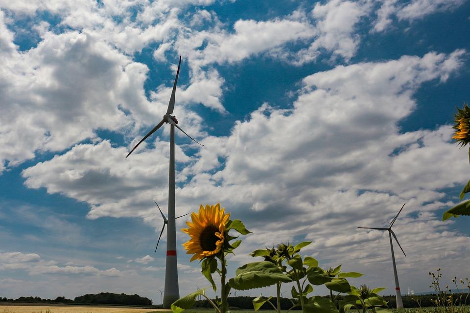 Windräder, Sun Flower, Field, Wind Energy, Power Supply