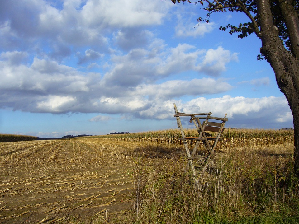 Cornfield, Harvested, Agriculture, Fields