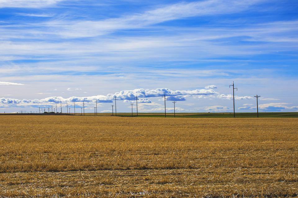 Wheat, Fields, Farm, Plantation, Agriculture