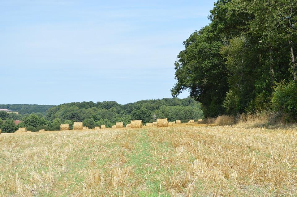 Fields, Straw, Hay Bales