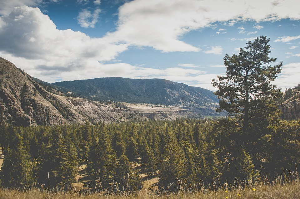 Landscape, Mountains, Hills, Valleys, Fields, Trees