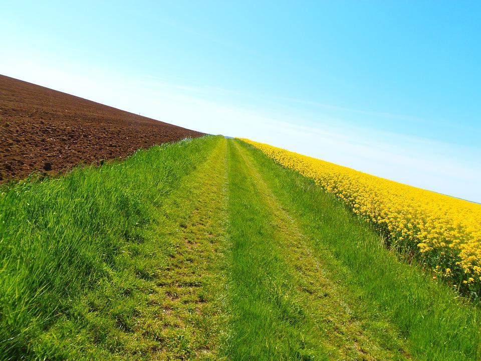 Path, Nature, Field, Hiking, Fields, Perspective