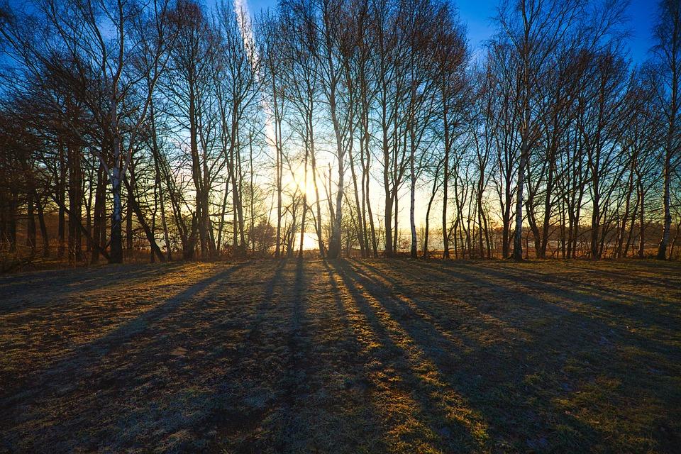 Sunrise, Trees, Fields, Ponds, Landscape, Nature, Sky
