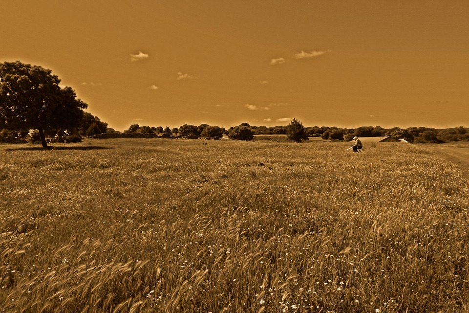 Fields, Wheat, Soledad