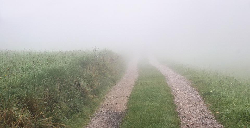 Way, Fields, The Fog, Landscape, Field, Green