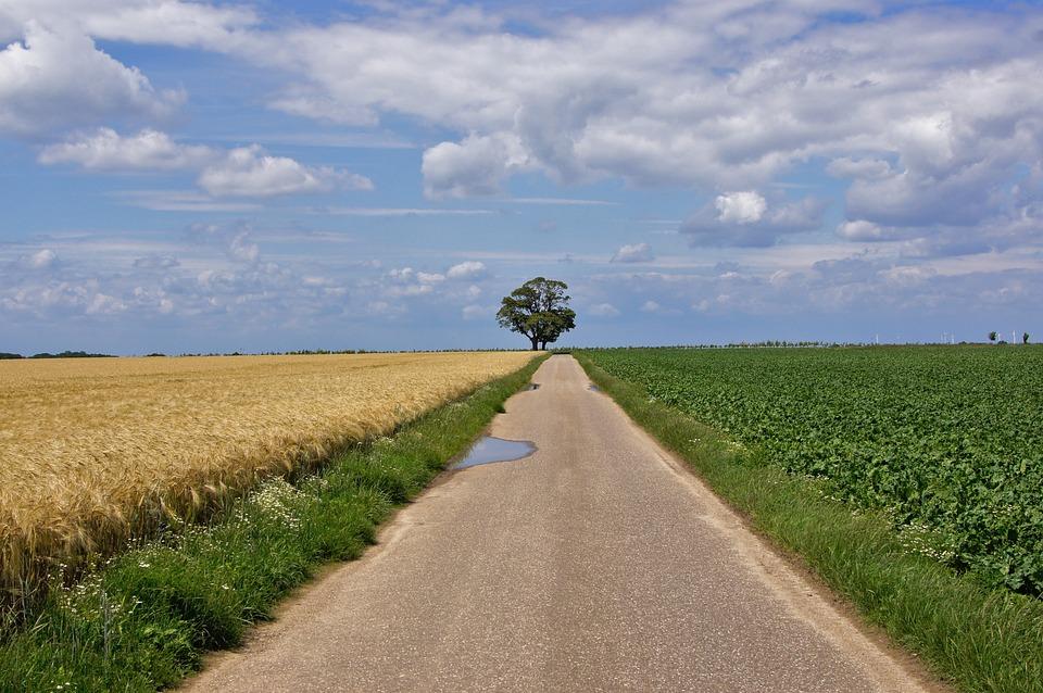 Landscape, Lane, Tree, Away, Fields, Silent