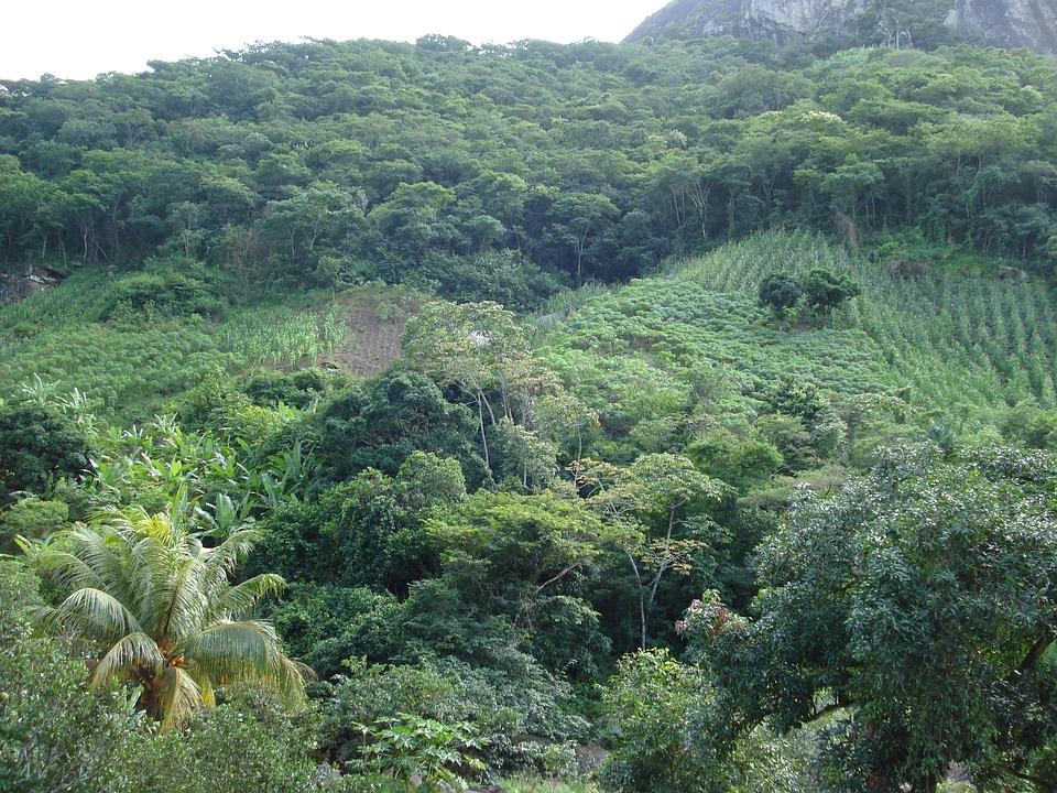 Vegetation, Brazil, Nature, Green, Forests, Fields
