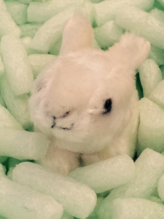 Hare, White, Rabbit, Fig, Cute