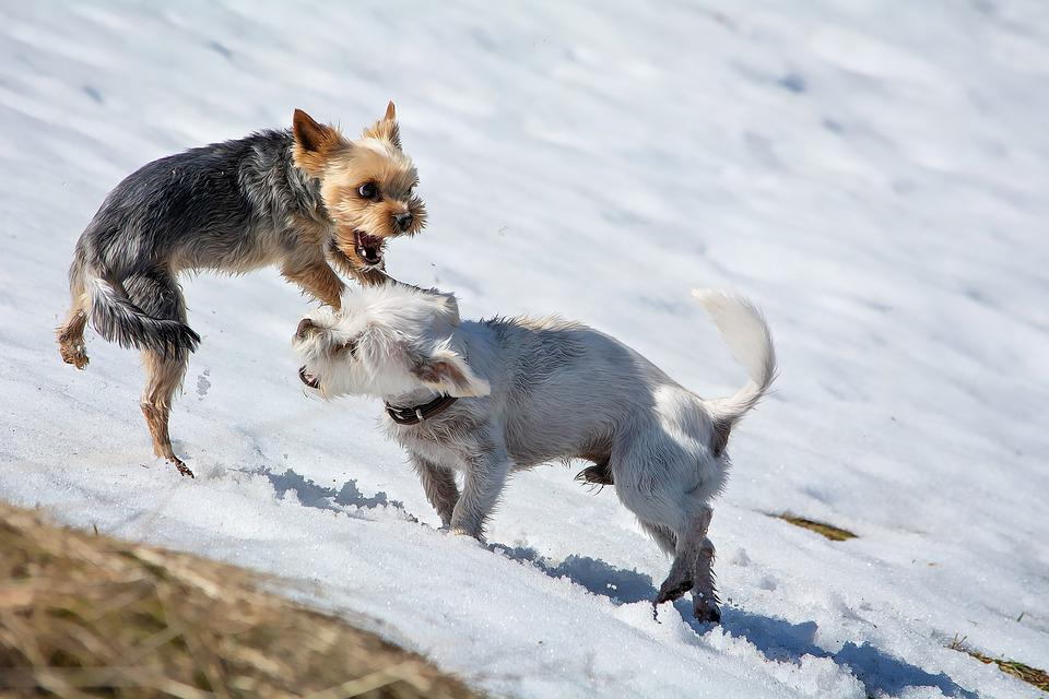 Dogs, Play, Out, Fight, Spout, Freewheel, Snow