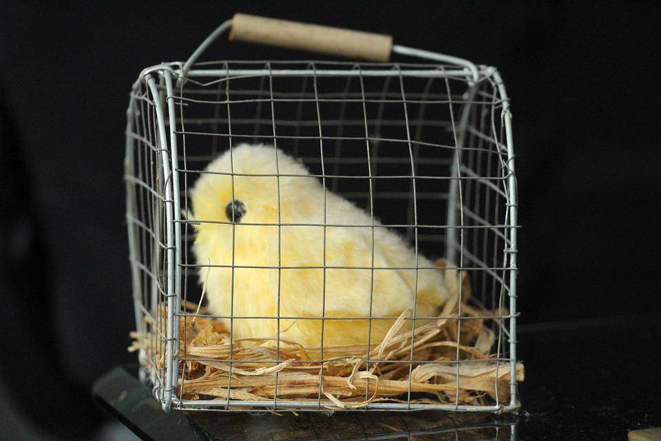 Chicks, Animals, Young, Figure, Bird, Yellow, Kaeftig