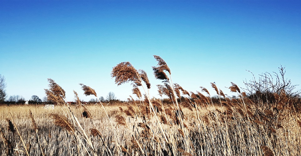 Reeds, Grass, Figure, Plant, Sky, Water, Lake