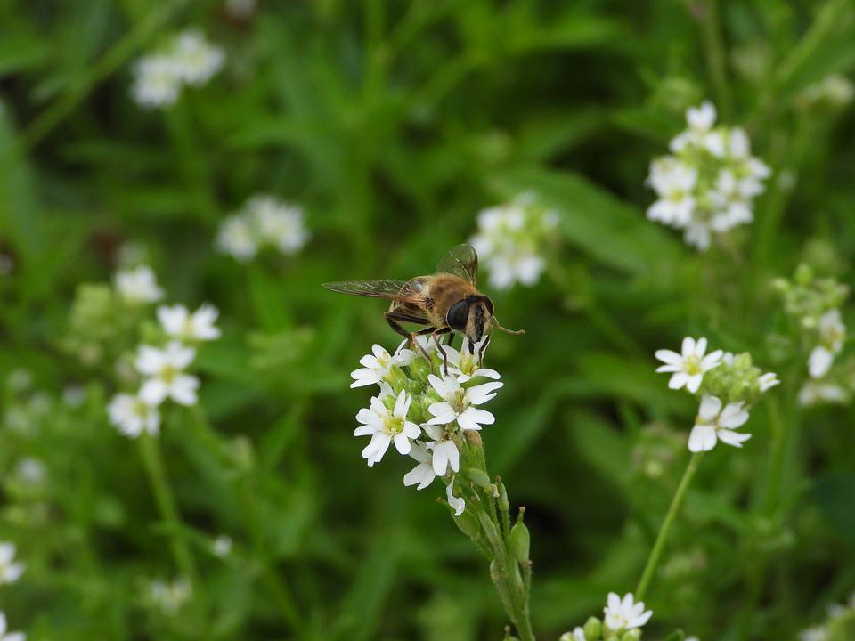 Osa, Bee, Insect, Green, Flower White, Figure, Animals
