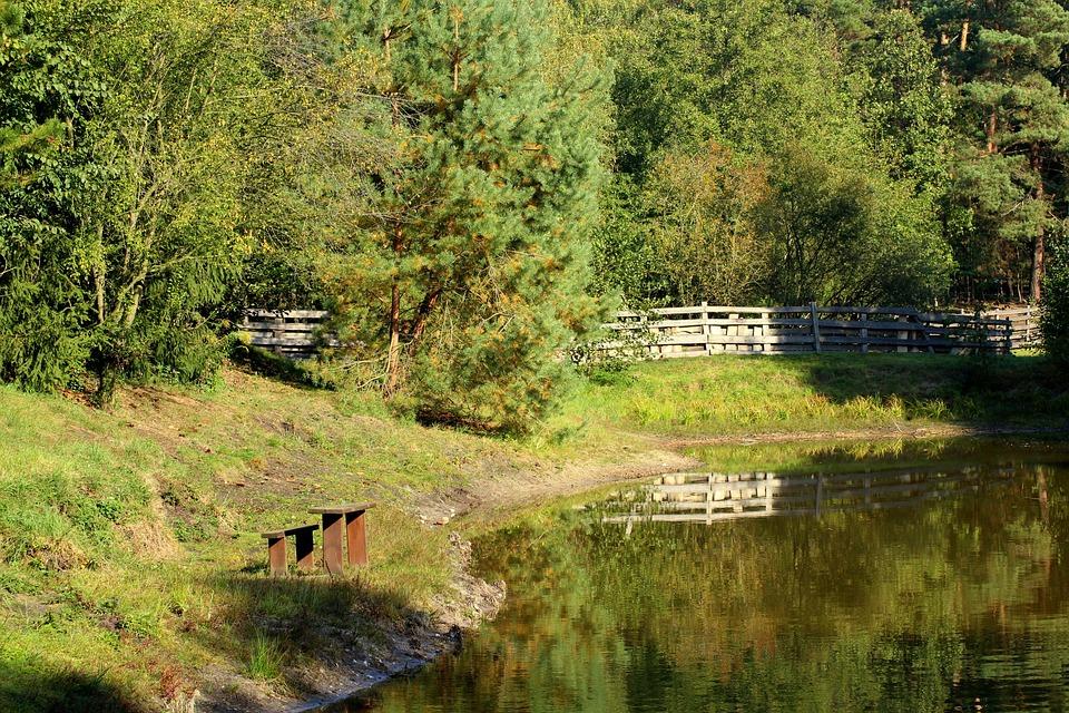 Forest, Forest Lake, Landscape, Pond, Figure