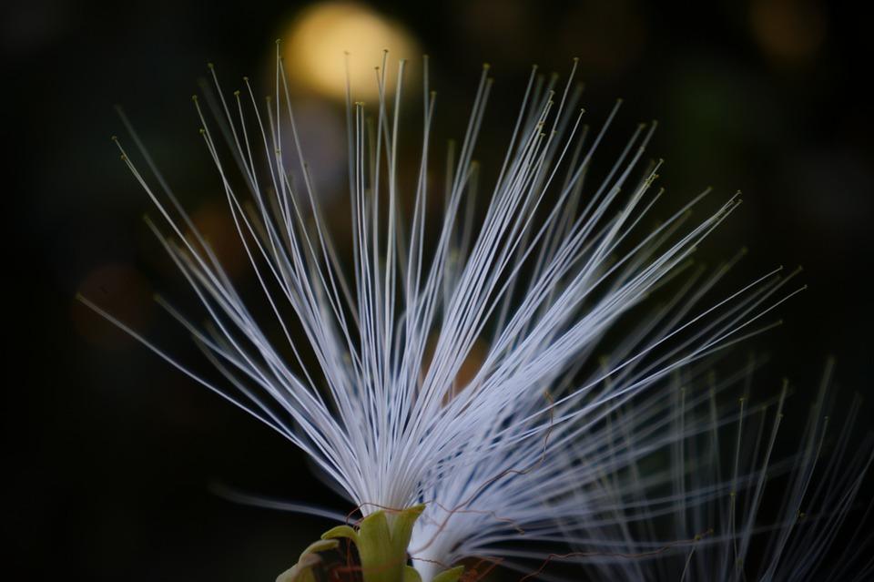 Petals, Rocio, Nature, Details, Filigree
