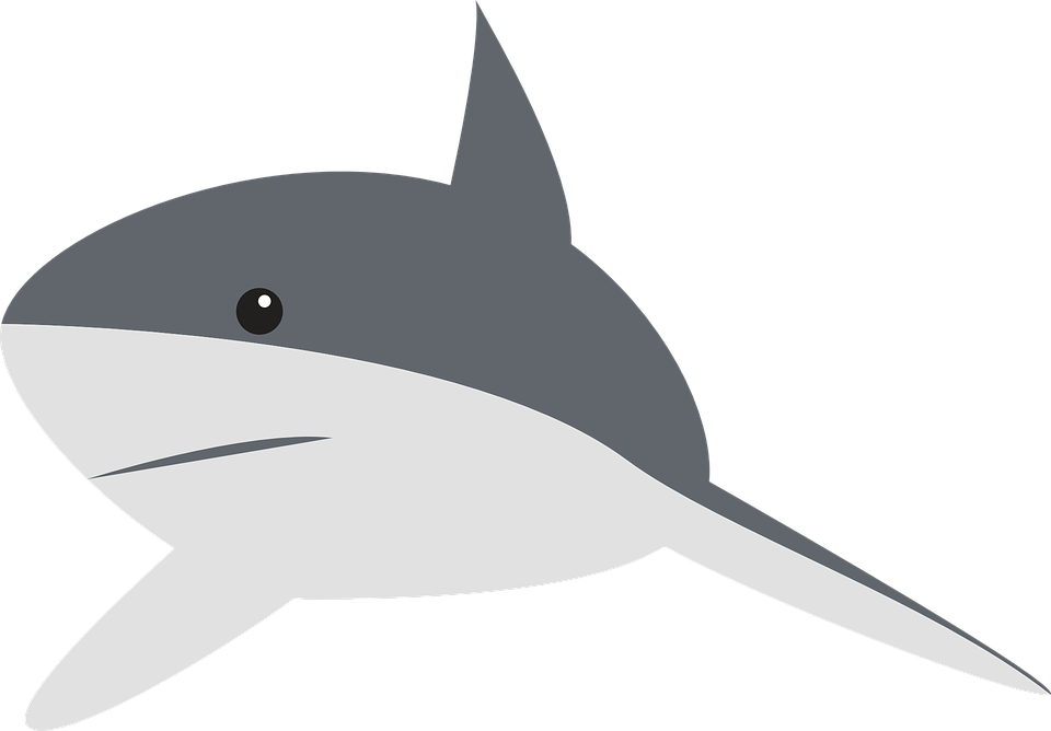 Shark, Perspective, Swimming, Fin, Animal, Gray
