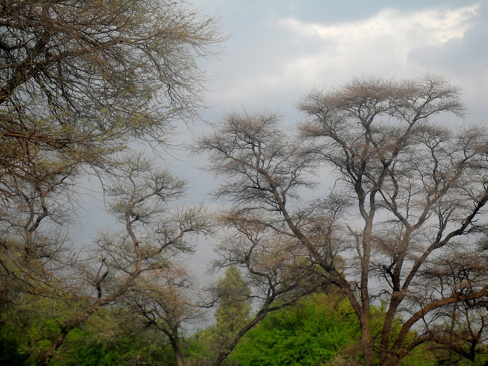 Sky, Trees, Green, Branches, Fine Branches, Clouds