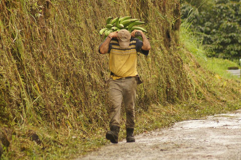 Characters, People, Of The, Field, Finlandia, Quindio