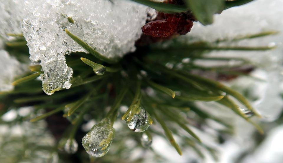 Winter, Nature, Frost, Season, Close Up, Fir, Drop