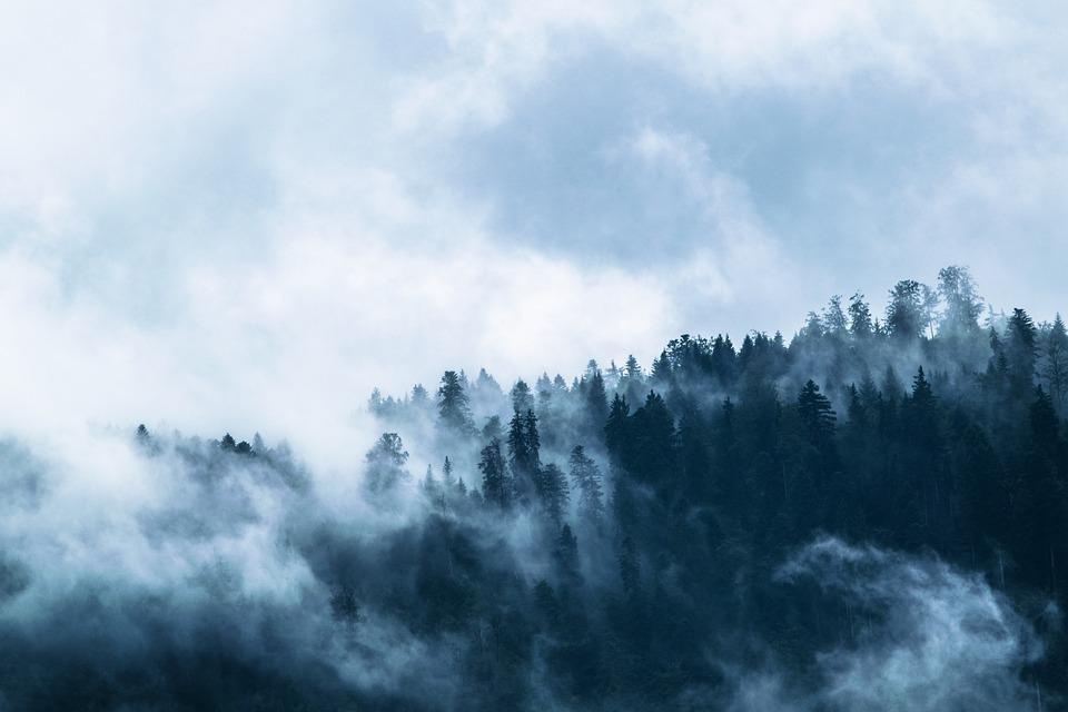 Fog, Forest, Dark, Gloomy, Fir Forest