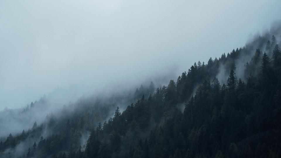 Conifers, Dark, Fir Trees, Fog, Foggy, Forest, Hazy