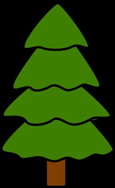 Tree, Fir, Pine, Spruce, Nature, Fir-tree, Wood