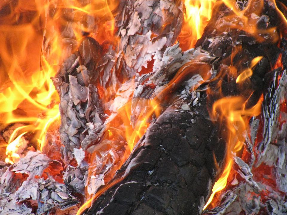 Bonfire, Fire, Forest