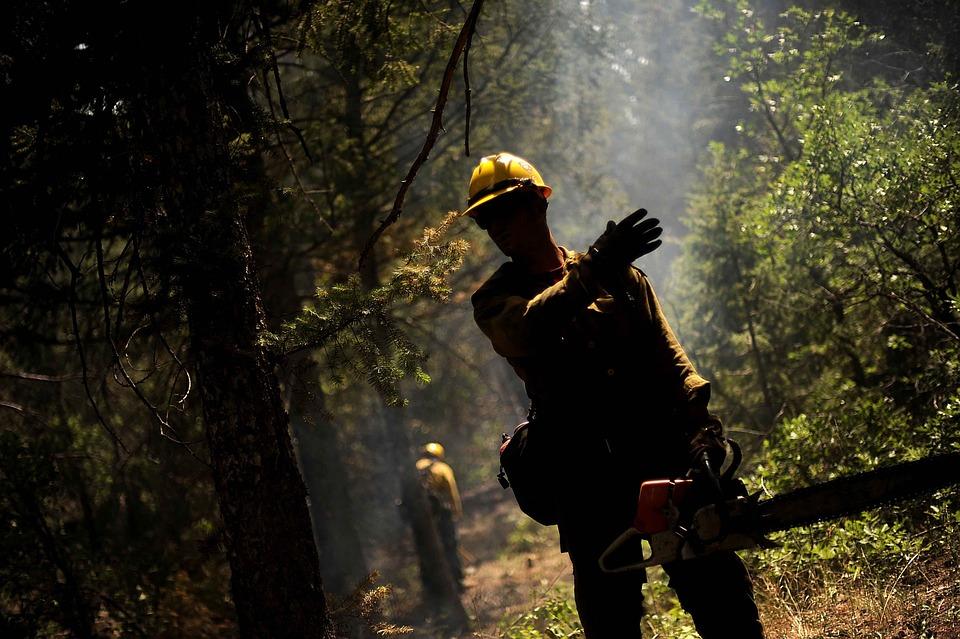 Firefighter, Forest Fire, Hot, Smoke, Smoky, Fireman