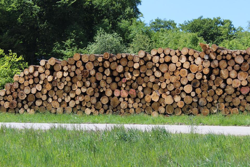 Wood, Holzstapel, Firewood, Growing Stock