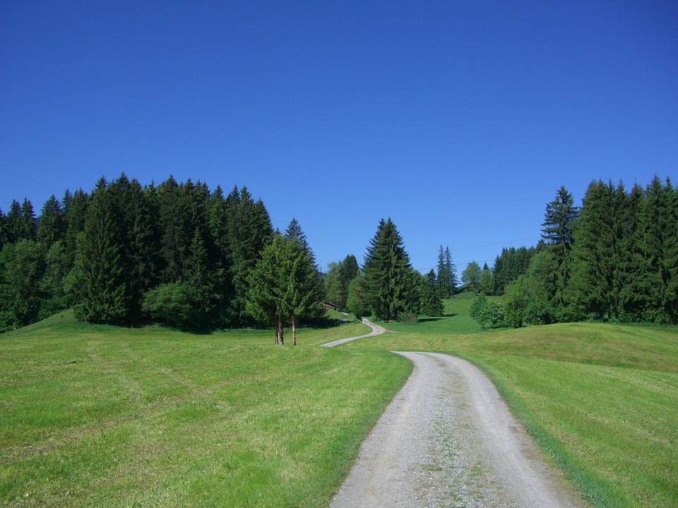 Away, Sky, Blue, Meadow, Firs, Green, Forest, Nature