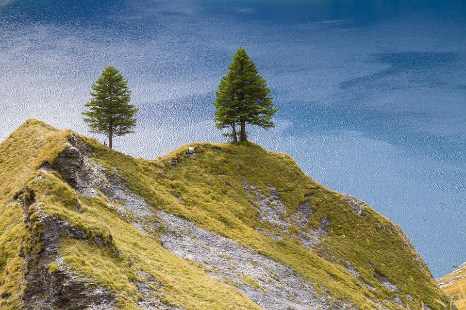 Tree, Firs, Hill, Lake Oeschinen