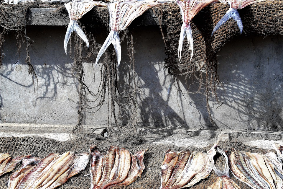 Fish, Drying, Boiling Hot, A Fishing Village