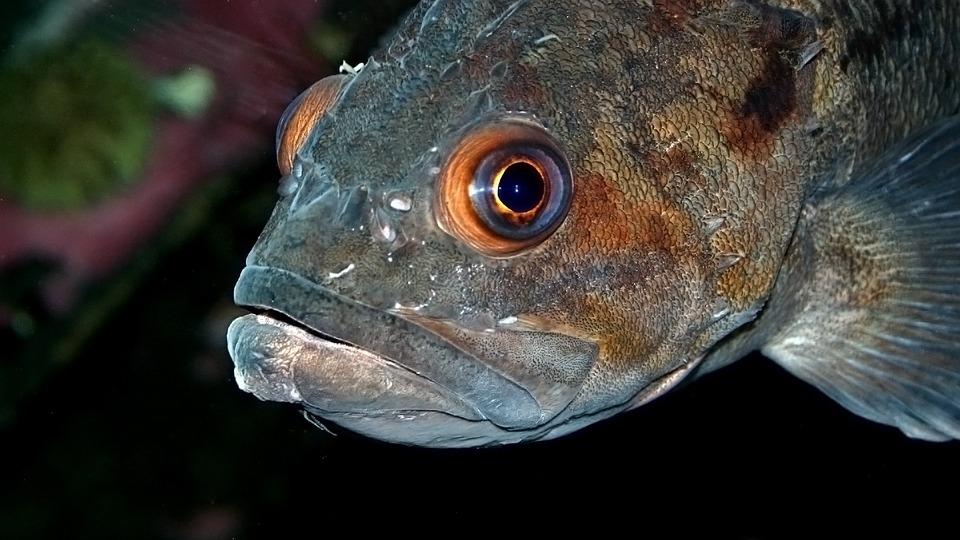 Fish, Nature, Sea, Animal, Ocean