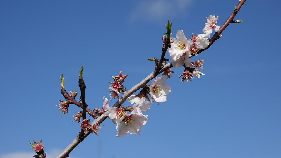 Branch, Shrub, Fish, Announcement Of The Spring