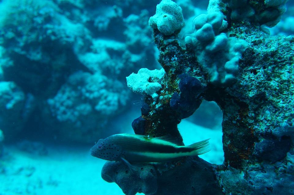 Your Red Sea, Tofik, Scuba Diving, Fish, Exotic