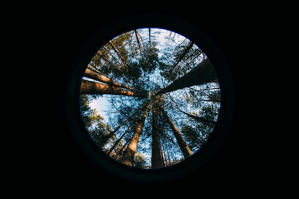 Forest, Fish Eye, Tree, Spruce, Nature, Lens, Sun, Blue