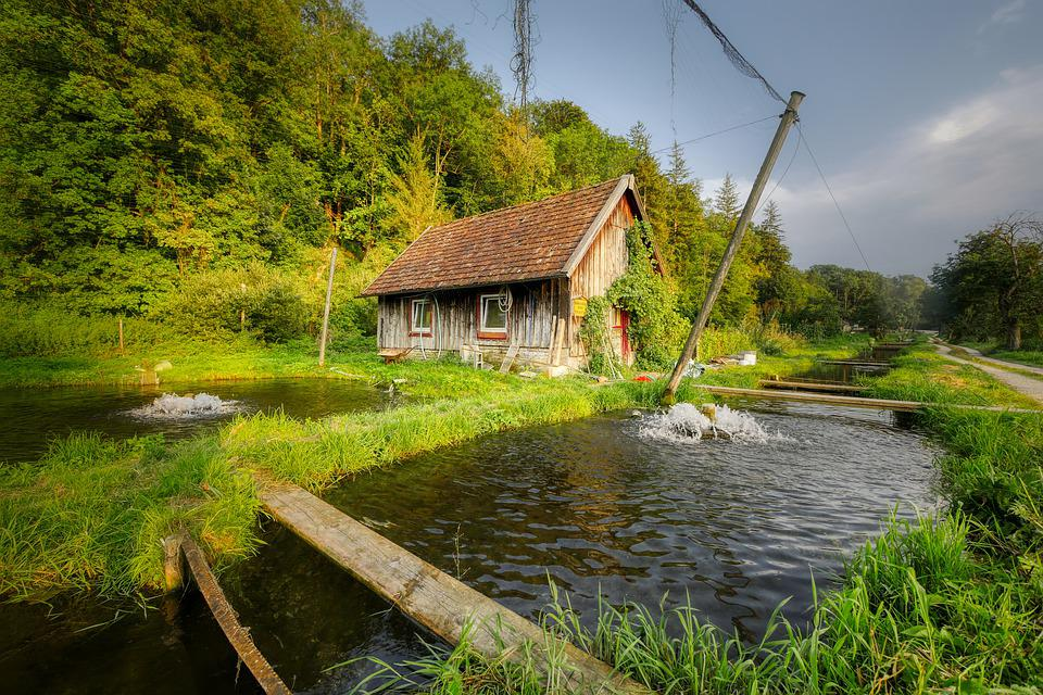 Fish Farming, Hut, Trout Breeding, Fish Farm, Bach