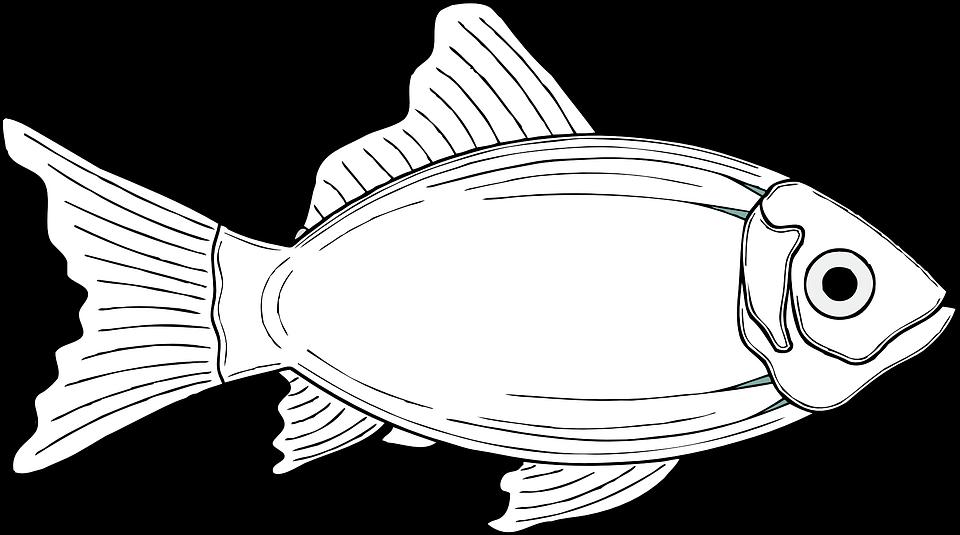 Fish, Cod, Fins, Animal