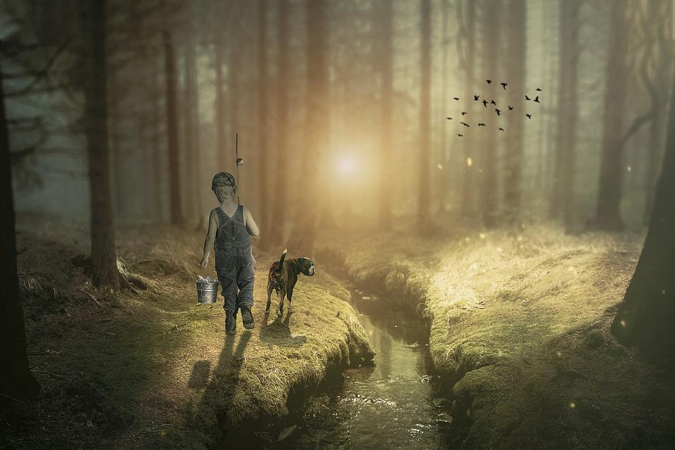 Manipulation, Forest, Trees, Glade, Fish, Fishing Rod