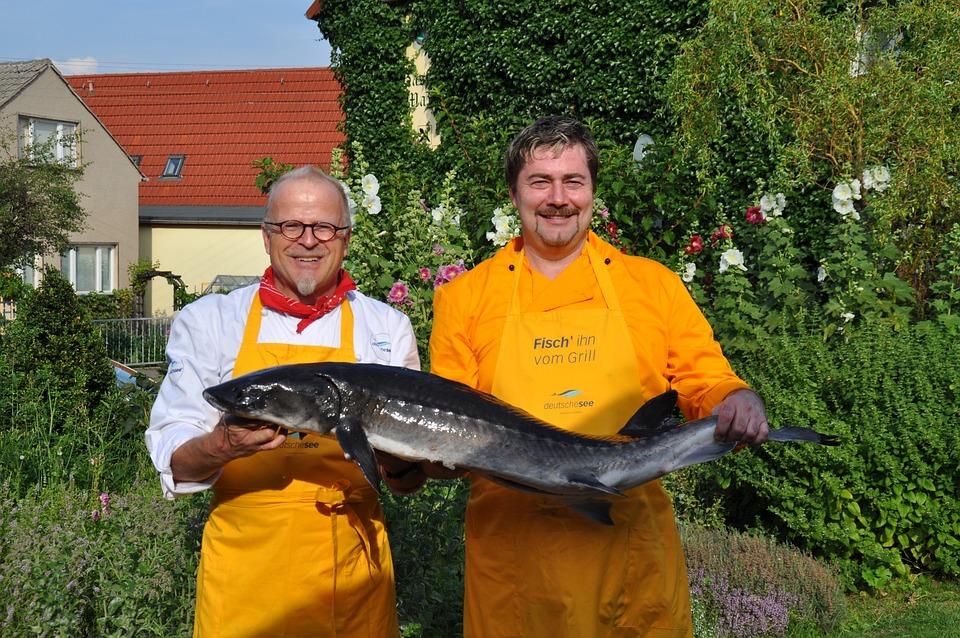 Chefs, Fischkoch, Fish, Interference