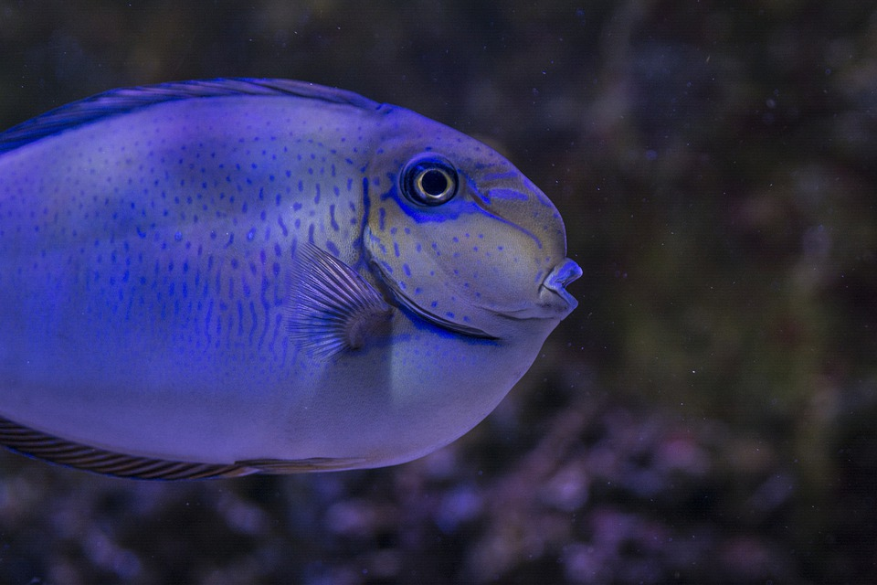 Fish, Exotic, Species, Saltwater, Aquarium, Marine, Sea