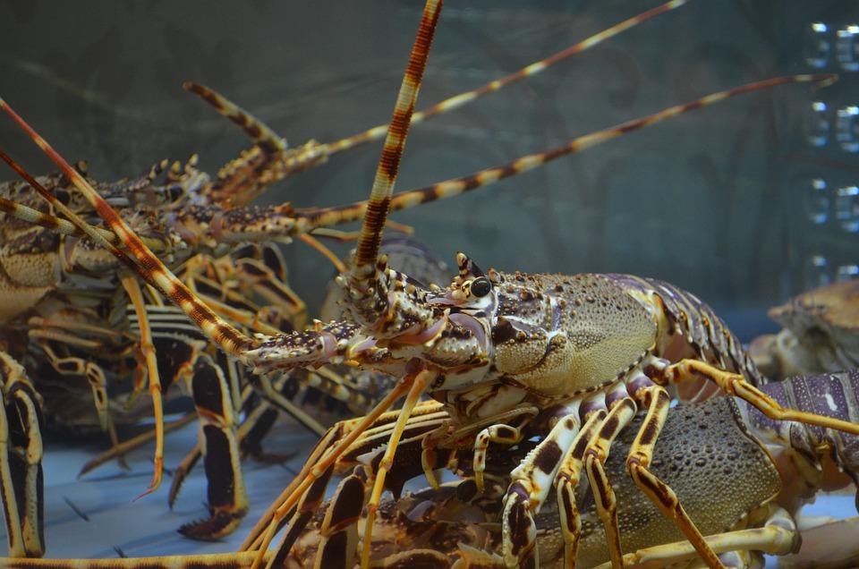 Lobster, Food, Fish, Crustaceans, Fish Market