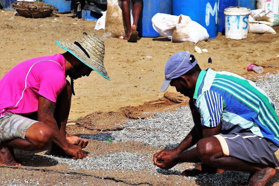Fish, Drying, Sorting, Work, Fish Market, Poverty, Sand