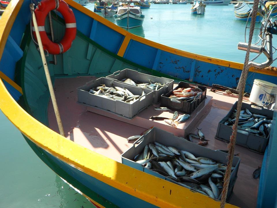 Fishing, Port, Malta, Marsaxlokk, Fischer, Fang, Fish