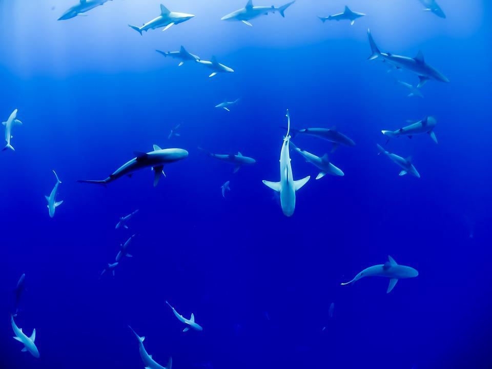 Animal, Aquarium, Fish, Ocean, Sea, Sharks, Swimming